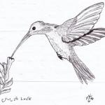 Hummingbird - Ink, 2010